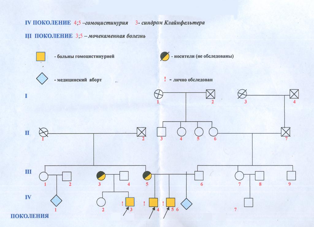 генеалогического дерева